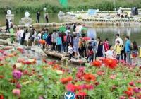 韩国庆典九月平昌孝石文化节包车服务