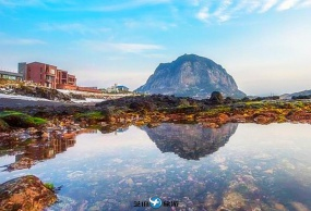 韩国 济州岛 挟才海边-绿茶博物馆- 泰迪熊博物馆 包车一日游