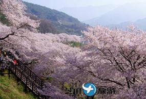 韩国庆尚南道河东十里樱花路一天游包车服务