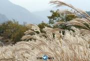 2019年韩国秋季旅游庆典攻略